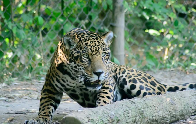 Central Florida Zoo