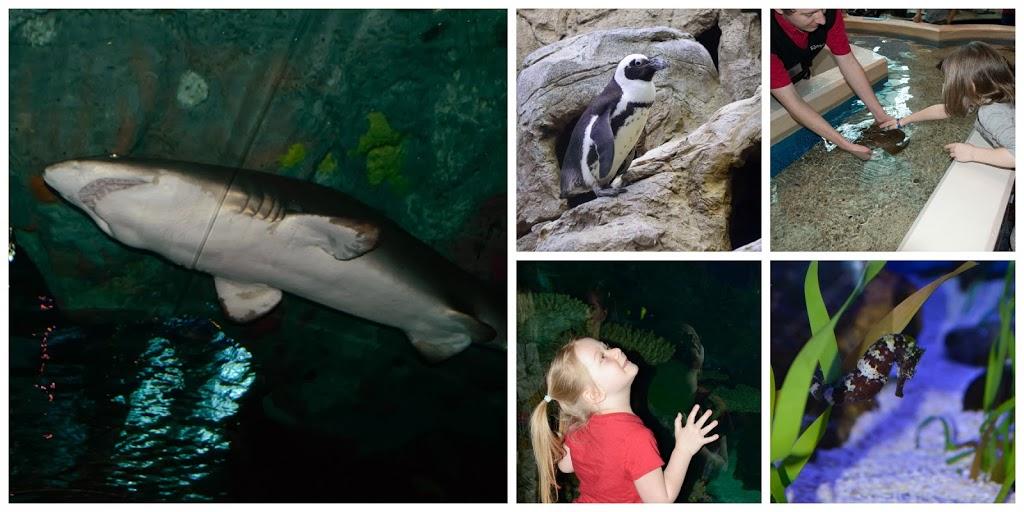 aquarium-collage
