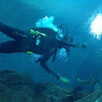 A Visit to the Georgia Aquarium