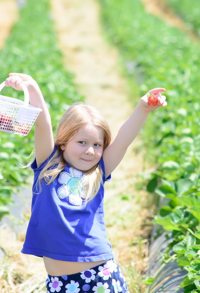 Strawberry picking AS
