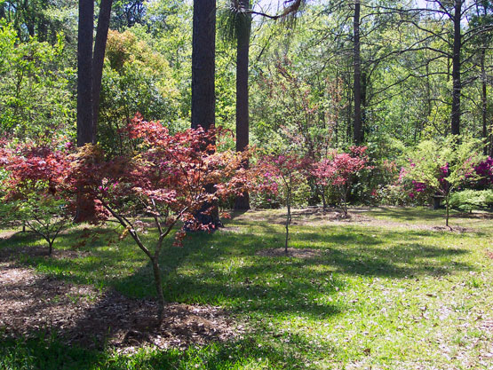 japanese-maple-garden