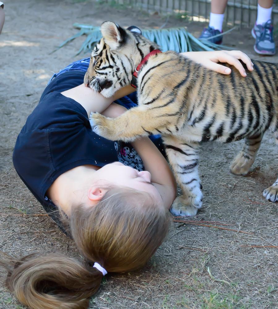 GC Zoo 7