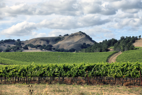 8 Most Romantic Cities in the US. Napa Valley, CA