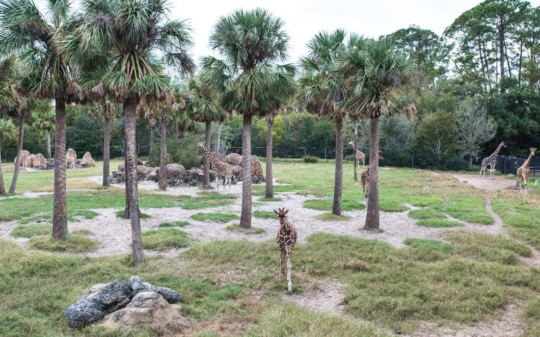 Jacksonville Zoo is a fun thing to do in Jacksonville with kids