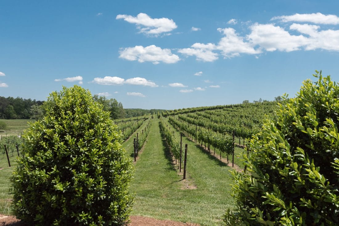 A weekend in North Georgia Wine Country